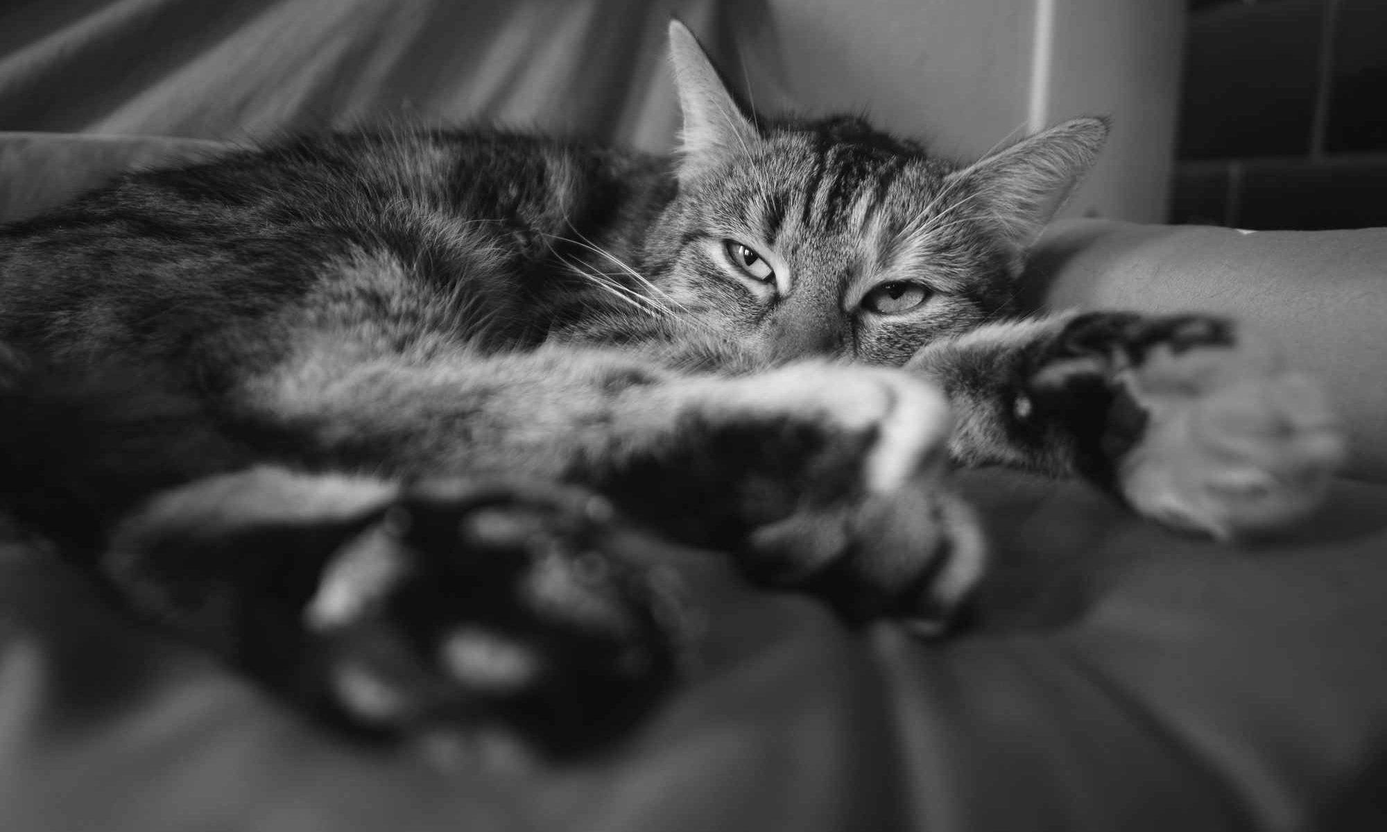 Katze Tierarztpraxis Hermannplatz